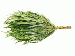 Веник эвкалиптовый для бани - Строим баню или сауну
